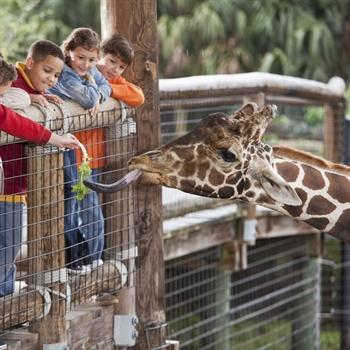 hôtels Campanile Zoo d'Amnéville