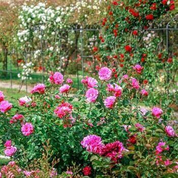 hôtels kyriad metz jardin botanique